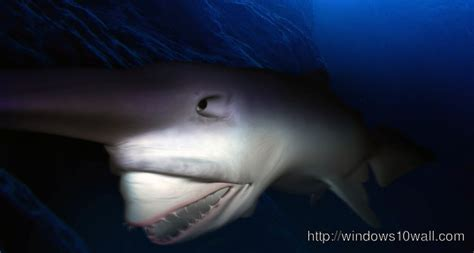 goblin shark background wallpaper windows  wallpapers