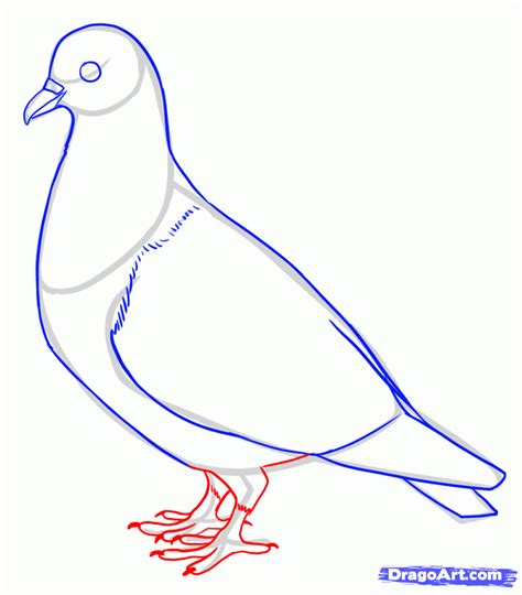how ro draw how to draw pigeons step by step birds animals free