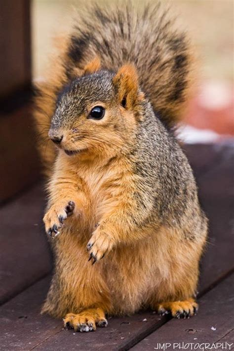 well the squirrels are back commercial script 39 best yellow images on pinterest yellow forests and