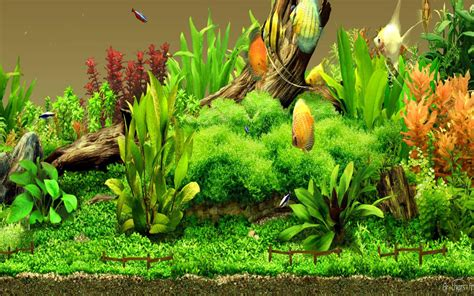 aquarium design wallpaper aquariums images aquarium wallpaper hd wallpaper and