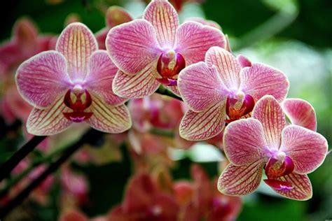 elenco fiori e piante dalla a alla z nomi piante dalla a alla z images