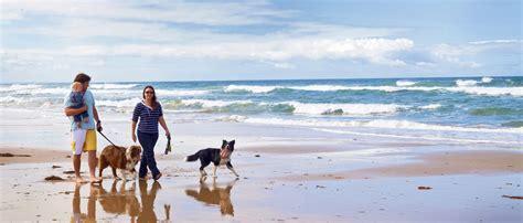 places that allow dogs pet friendly places this blogs