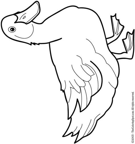 free duck life cycle coloring pages