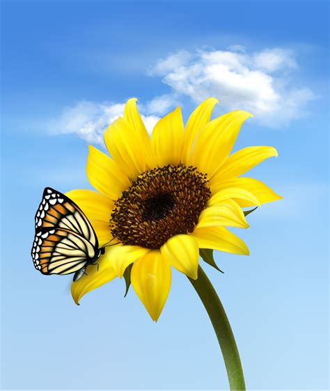 printable sunflower images free sunflower images movie search engine at search com