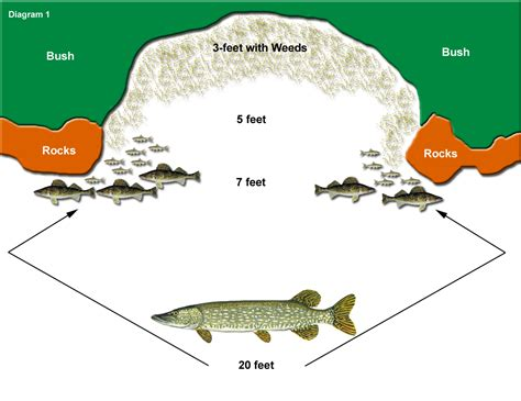 pike colors ontario northern pike fishing tips tactics