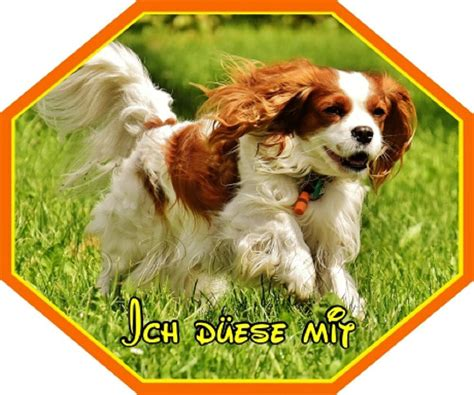 Aufkleber Cing by Aufkleber Cavalier King Charles Spaniel Markenqualit 228 T