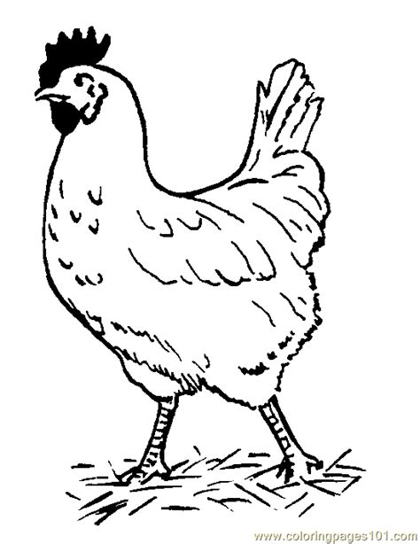 printable hen images free printable coloring page hen birds gt chicks hens and