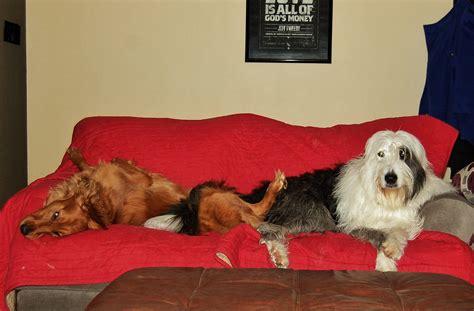 dog with a blog house 24 dogs who found their valentine housemydog blog