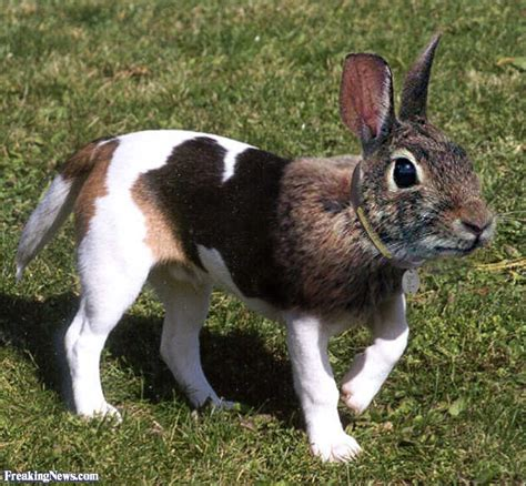 animal mating rabbit cat bunny cat mate hybrid animals pictures freaking news