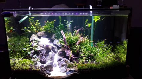 led lights for planted freshwater aquariums lighting for freshwater planted aquarium lilianduval