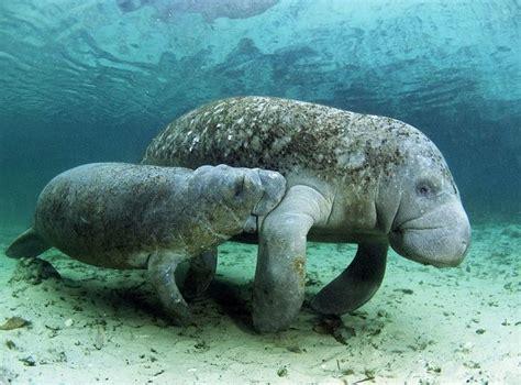 los animales marinos marine animales acu 225 ticos nombres caracter 237 sticas y qu 233 comen animalesde net