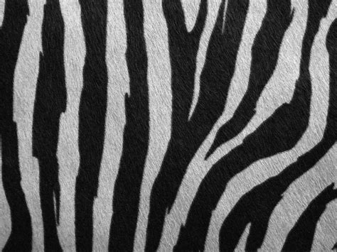 photoshop zebra pattern tutorial free fur textures for photoshop psddude
