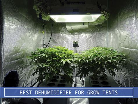 dehumidifier  grow tents  plants review  amazon