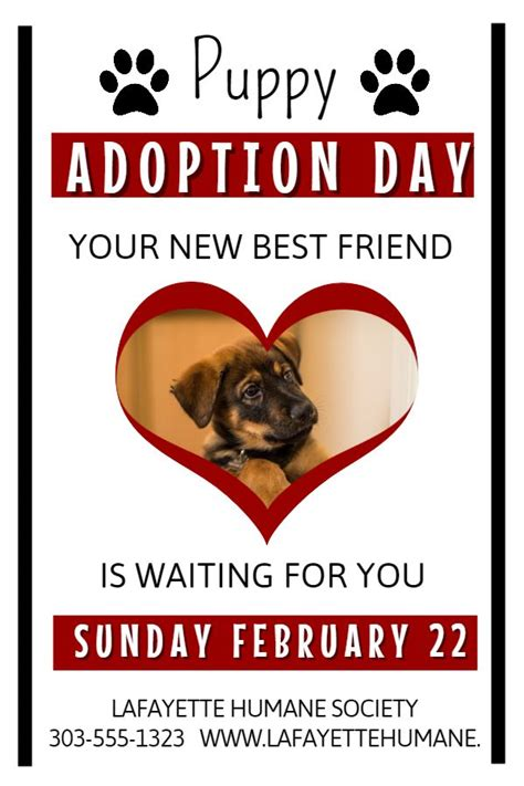 adoption flyer template 12 best lost pets and pet adoption flyers images on