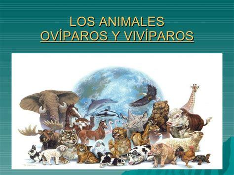 imagenes de animales oviparos viviparos y ovoviviparos ov 237 paros y viv 237 paros