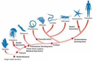 cladogram worksheet answer key genetics pinterest