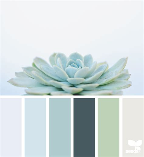 design seeds succulent hues design seeds