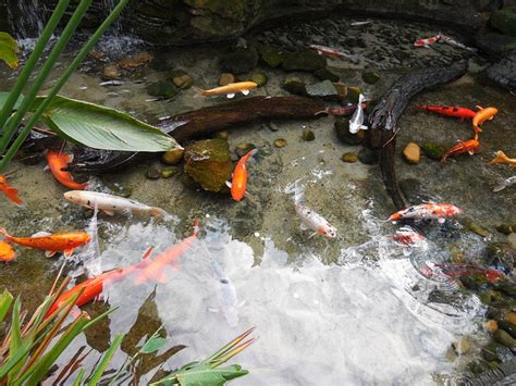 how to make a koi pond in your backyard how to build a backyard koi pond the garden and patio