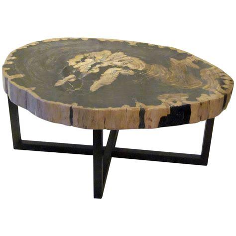 contemporary indonesian petrified wood coffee table  stdibs
