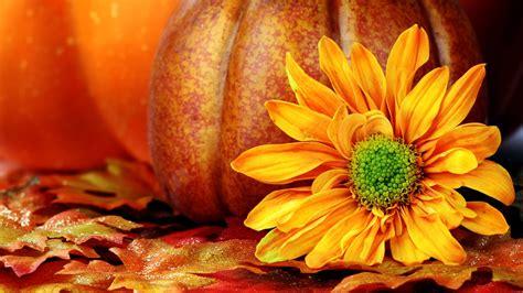 Pumpkin Wallpaper 25774 1920x1080 px ~ HDWallSource.com