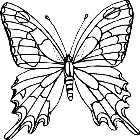 Flying Butterfly Outline by Best Butterfly Outline 1199 Clipartion