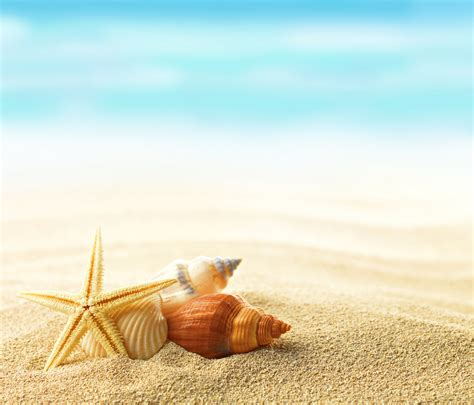 shell wallpaper beach seashell wallpaper wallpapersafari