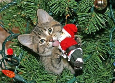 cats vs christmas trees and how you can make a cat proof