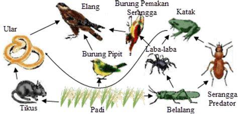 penelitian sederhana ekosistem sawah mikirbae