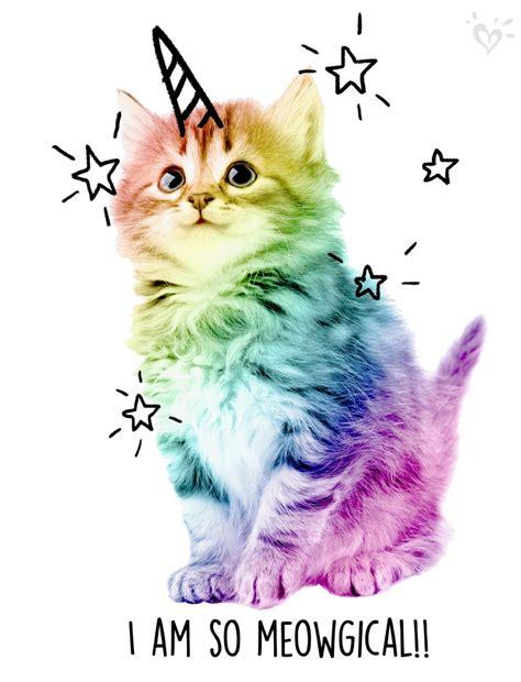 Cat Rainbow Meme - uni cats are spellbinding the pet shop pinterest uni cat and unicorns