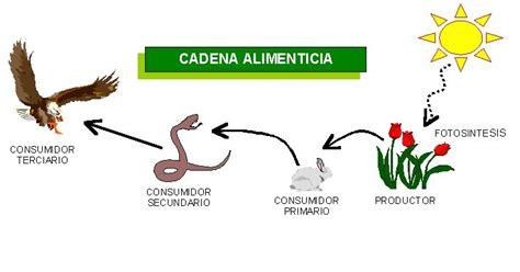 cadena alimenticia quienes son los productores cadenalimenticia