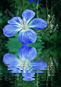imagenes de rosas sobre agua biolog 205 a iv