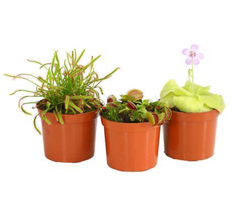 pflanzen set garten karnivoren pflanzen set dehner garten center
