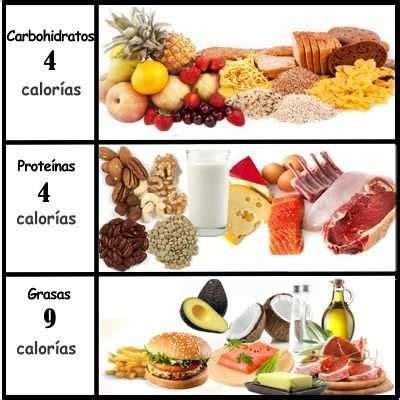 que aportan los alimentos 191 cu 225 ntas calor 237 as aportan los carbohidratos l 237 pidos y