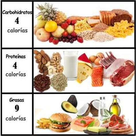 proteinas o carbohidratos 191 cu 225 ntas calor 237 as aportan los carbohidratos l 237 pidos y