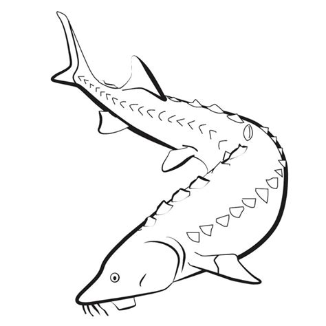 lake fish coloring pages sturgeon coloring pages coloring pages