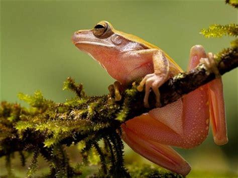 imagenes de animales que respiran por la piel animales que respiran por la piel animales que