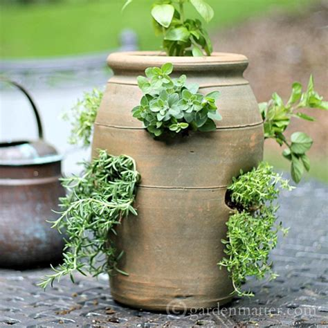 Growing Herbs In Planters by Growing Herbs In A Strawberry Pot Hearth Vine