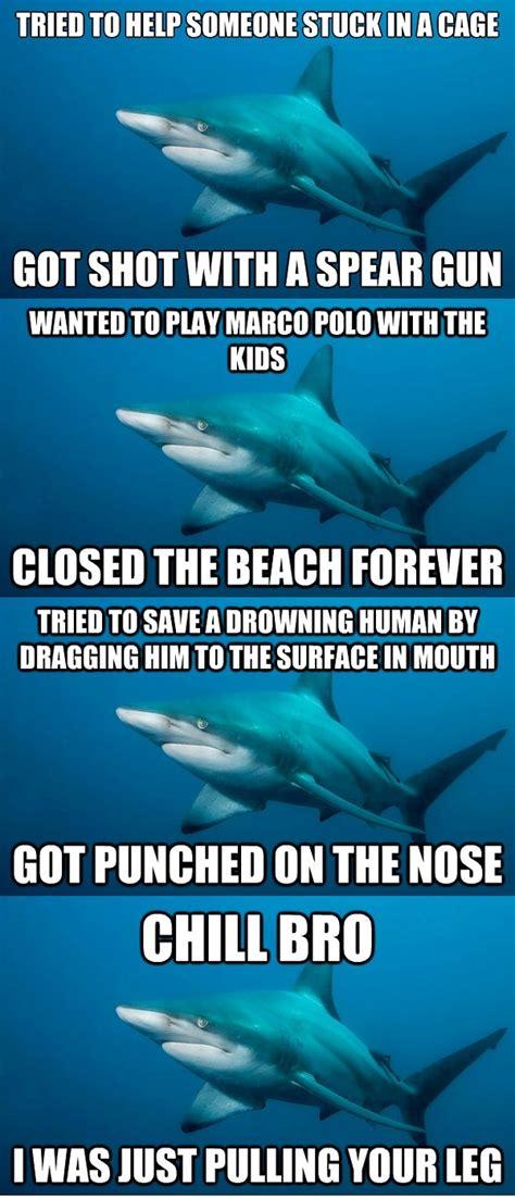 baby shark jokes misunderstood shark meme daily picks and flicks