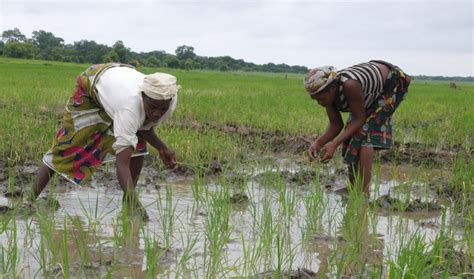 agriculture  food security nigeria  agency