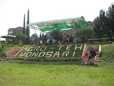 Teh Wonosari lokasi dan harga tiket masuk kebun teh wonosari lawang