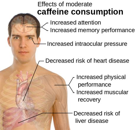 File:Effects of moderate caffeine consumption.svg   Wikipedia