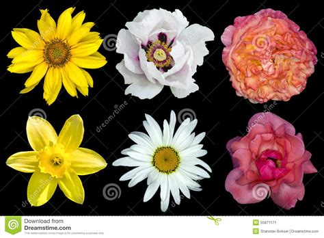 32896 Black White Yellow Collage S M L Top mix collage of flowers white peony and roses