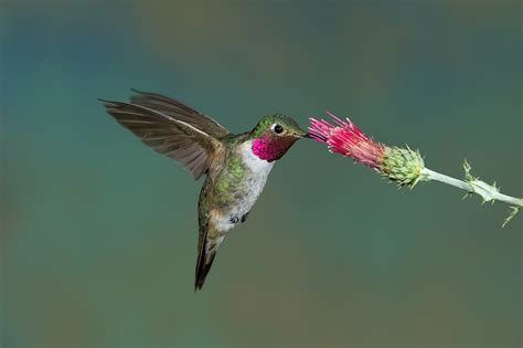 top 28 when do you quit feeding hummingbirds wild
