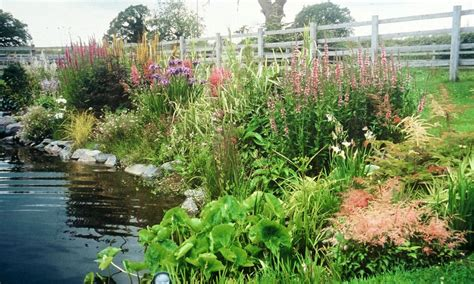 plant an area for moist plants or a muddy bog garden