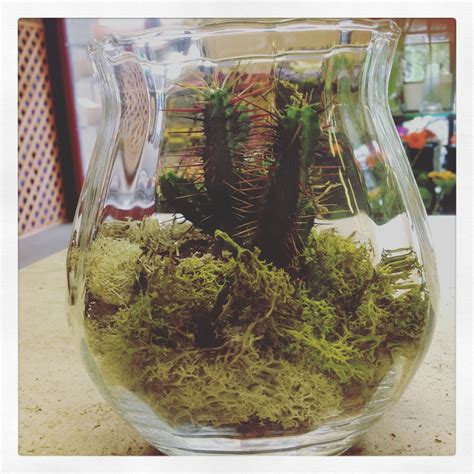 composizione piante grasse in vaso composizione con piante grasse in vaso di vetro www