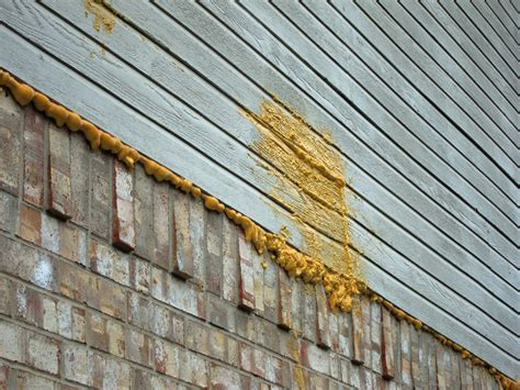 wasps in siding of house tiny white ants in kitchen bee nest in house siding pest control industry in india