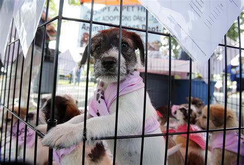 pet stores that sell puppies in ct in more cities that doggie in the window is not for sale connecticut radio