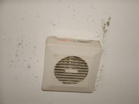 How To Prevent Mold how to prevent molds mold awareness