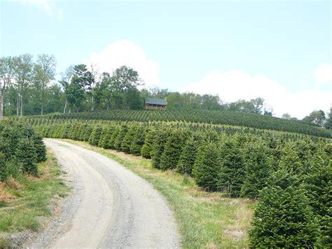 marion nc christmas tree farm little switzerland nc tree farms photo albums fabulous homes interior design ideas