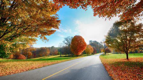 Hd High Resolution Wallpaper For Desktop Colorfull Trees Top Hd Wallpapers High Resolution Wallpapers For Desktop